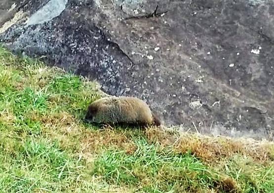 gettysburg groundhog